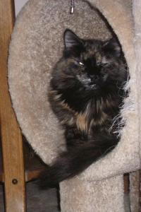 Regal in her cat tree
