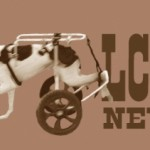 Newsletter logo brown