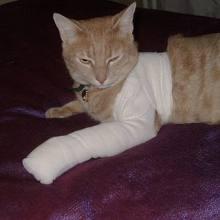 Healing cat
