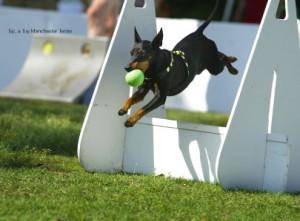 dog_sports