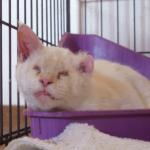 new_cat
