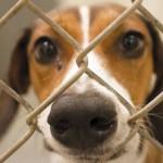 dog_in_shelter
