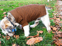 Is your four legged little one protected against the elements?