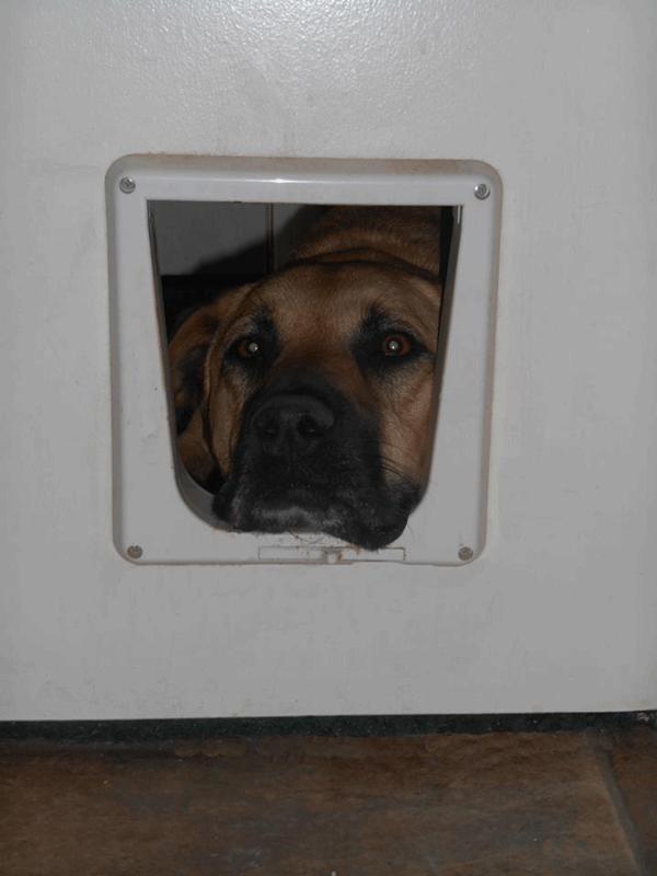 Maggie-cat-door