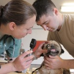 Photo credit goes to Army Medicine @ https://www.flickr.com/photos/armymedicine/