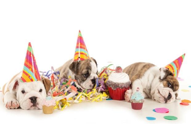 Birthday Dog Images Free