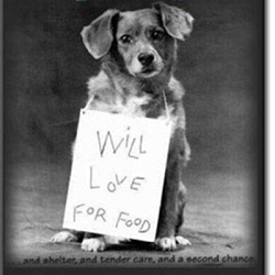 http://doggietreasures4u.com/general/pet-adoption-or-adopt-a-human/