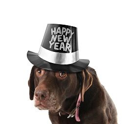 http://celiasue.com/2011/12/31/pet-parents-new-years-resolutions/