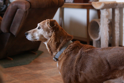 Listlessness In Dogs And Not Eating